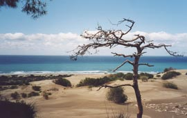 Patara Beach - Turkey